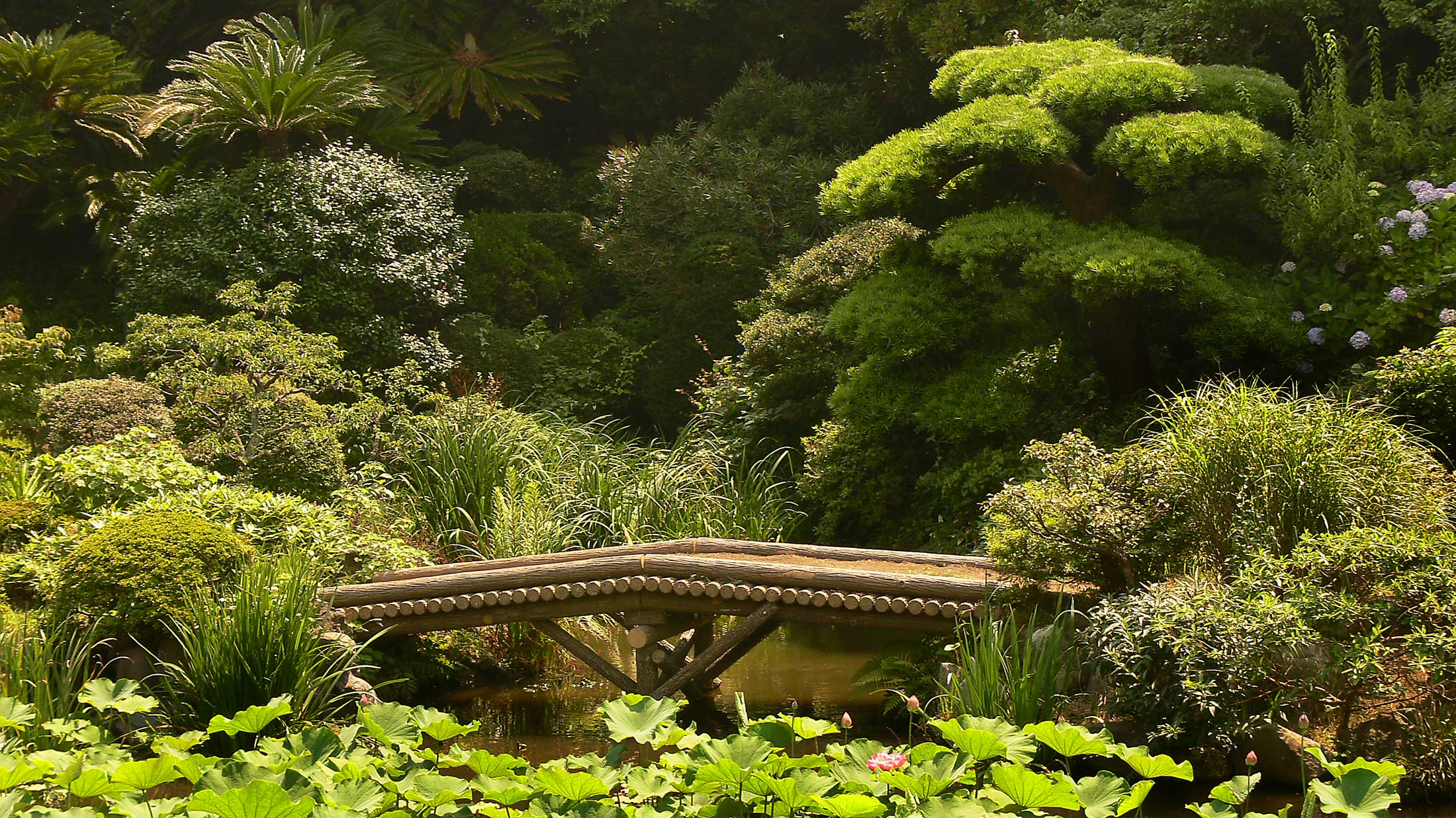 japanese-garden-bridge