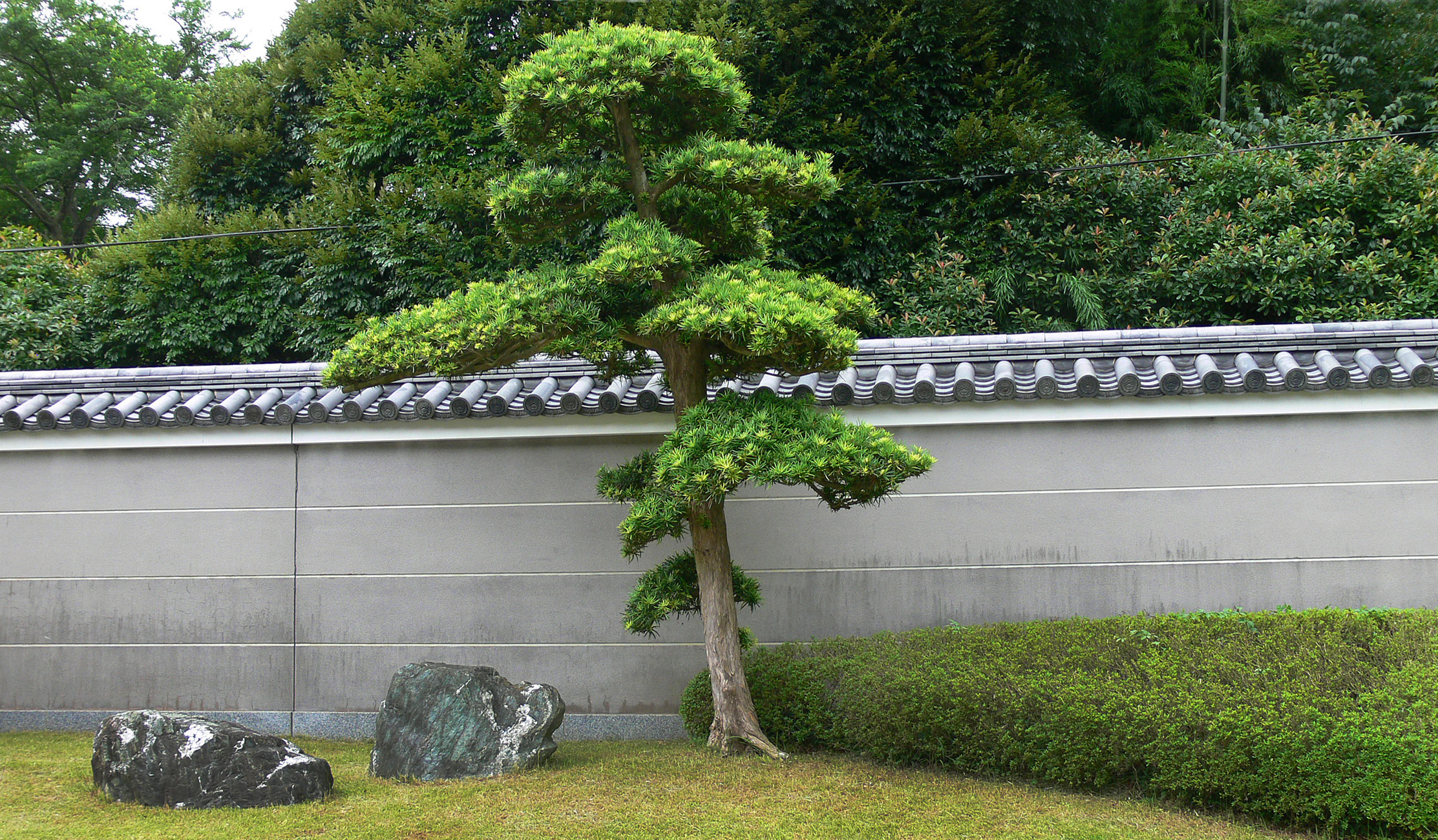 tree-in-kamamura